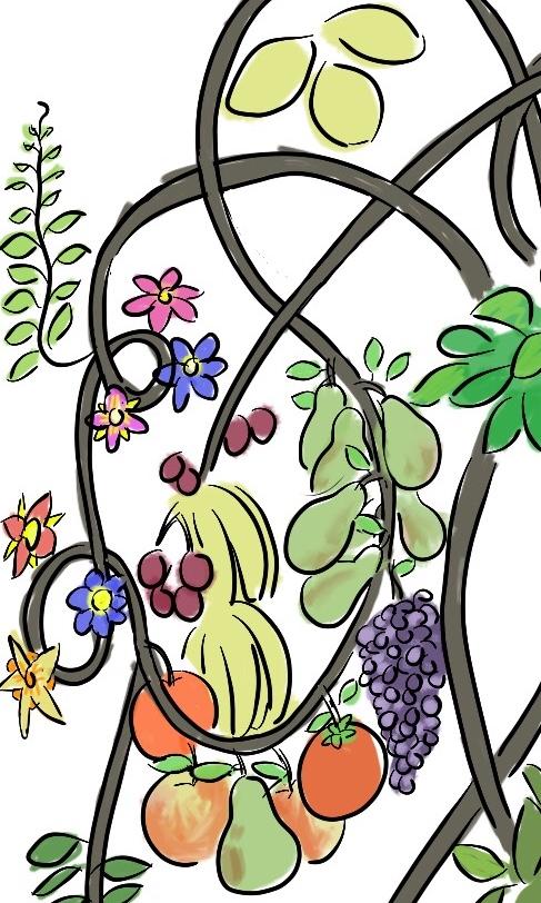 Welig tierend fruit